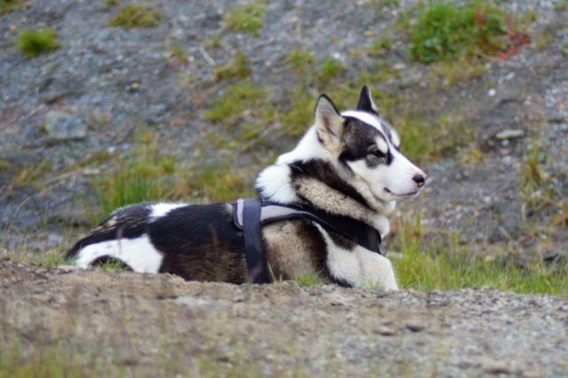 4Longyearbyen21