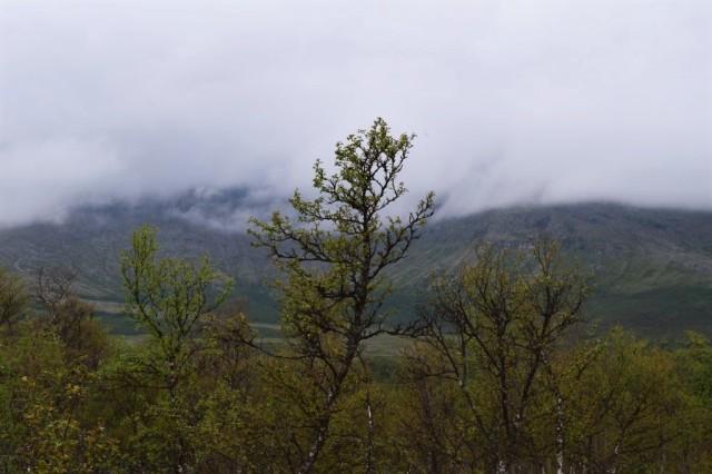 Stensdalen-Vålådalen 6