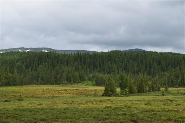 Stensdalen-Vålådalen 66