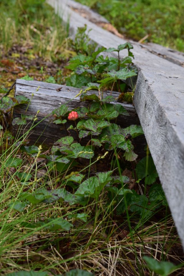 Stensdalen-Vålådalen 70