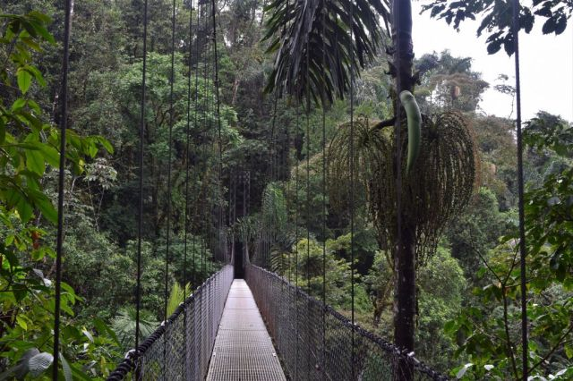 1Mistico Hanging Bridges 100