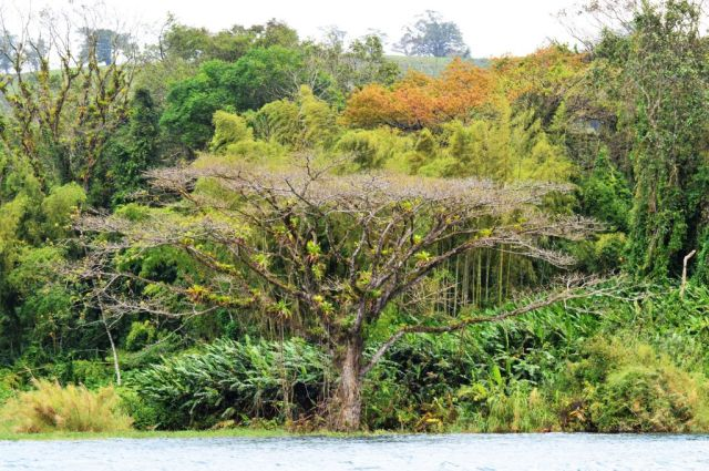 1Resa La Fortuna - Monteverde 28