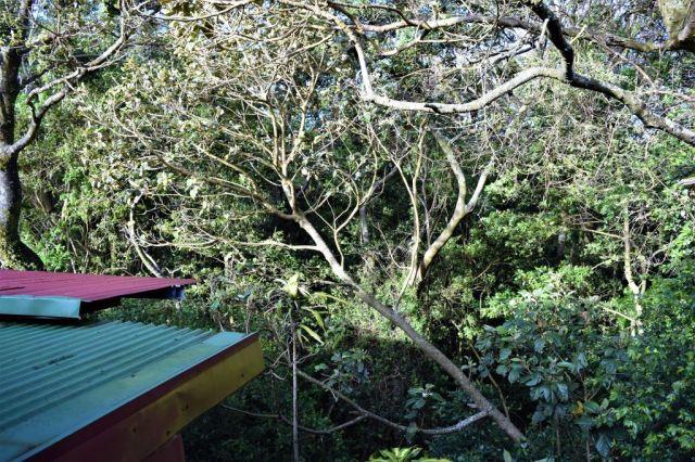 2Manakin Lodge, Monteverde 50