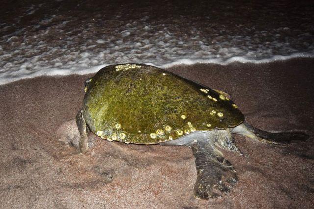2Sköldpaddstur 2