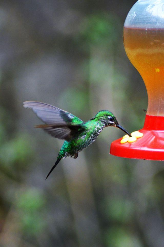 5Hummingbird Garden 21
