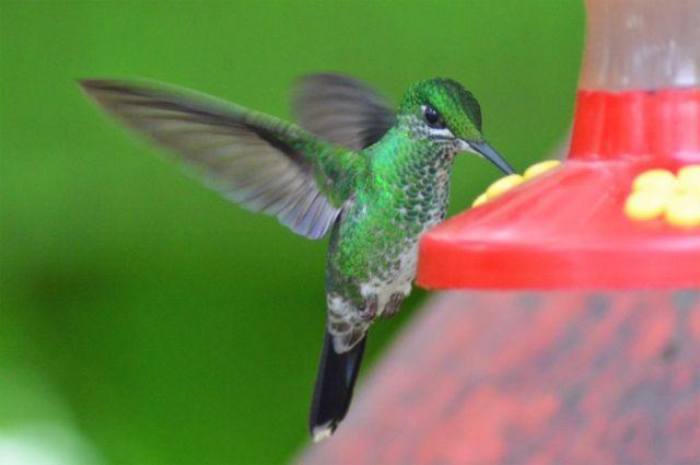 5Hummingbird Garden 30