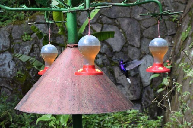 5Hummingbird Garden 9