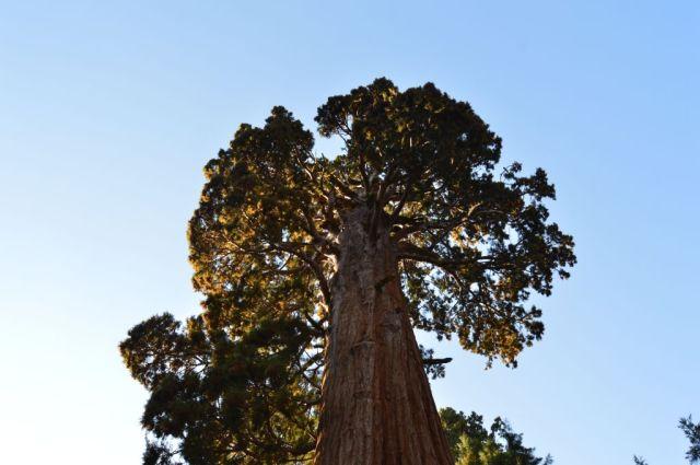 10Sequoia National Park, Sentinel 16