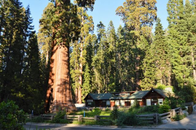 10Sequoia National Park, Sentinel 2