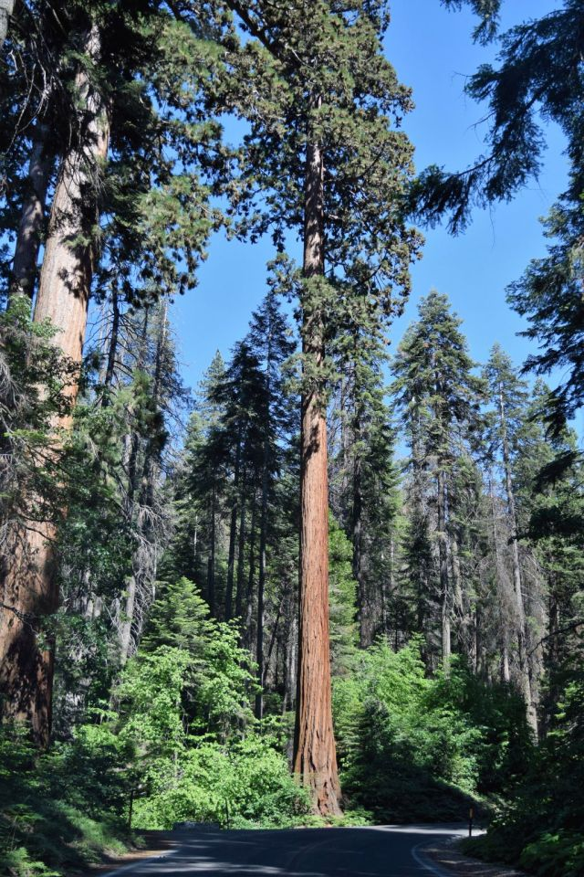 1Sequoia National Park 35