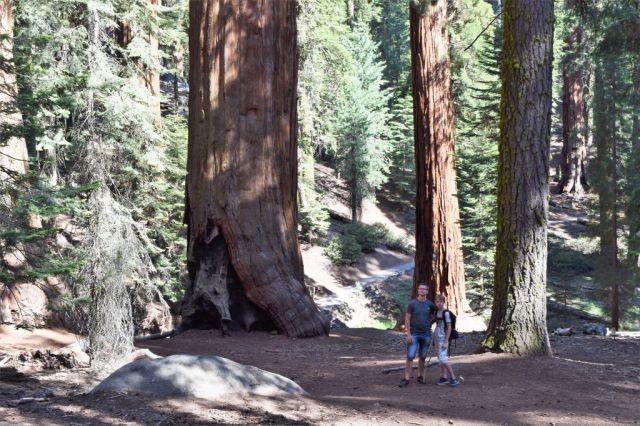 3Sequoia National Park 17