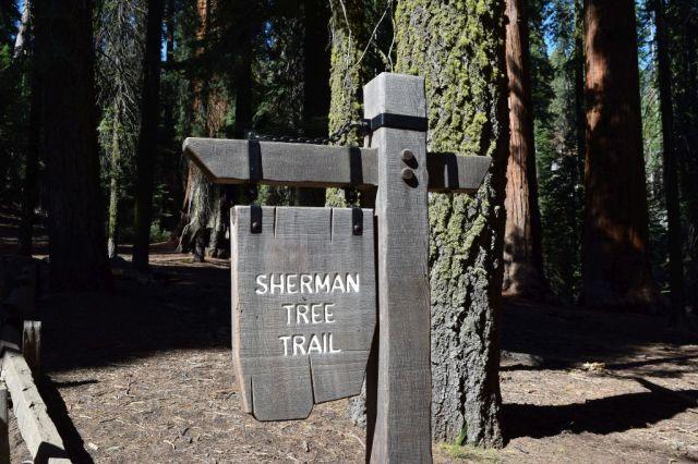 3Sequoia National Park 35