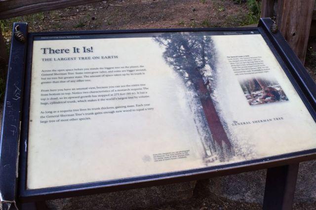 5Sequoia National Park, General Sherman 1