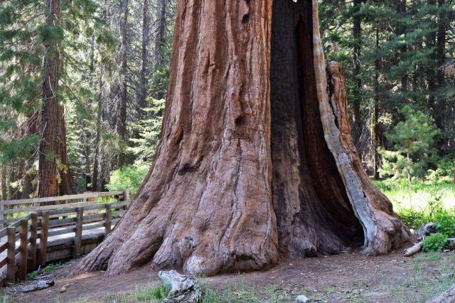 5Sequoia National Park, General Sherman 34