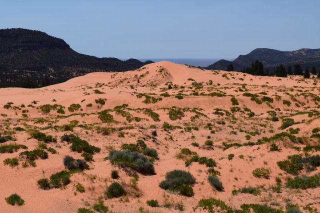 Pink Coral Sand Dunes State Park 11