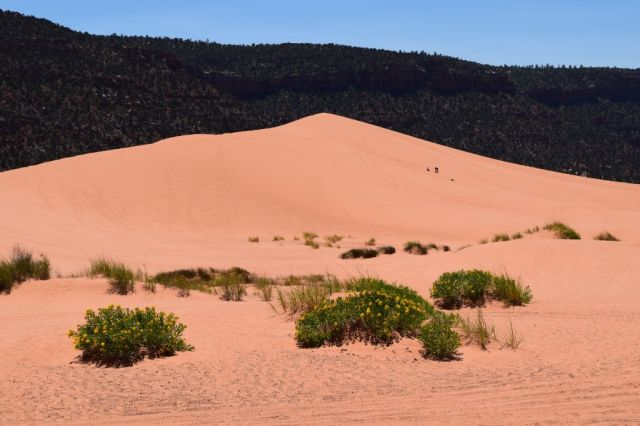 Pink Coral Sand Dunes State Park 53
