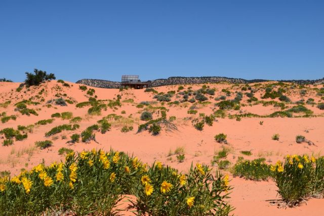 Pink Coral Sand Dunes State Park 58
