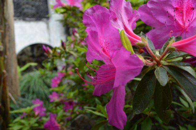 2Yu Garden 46