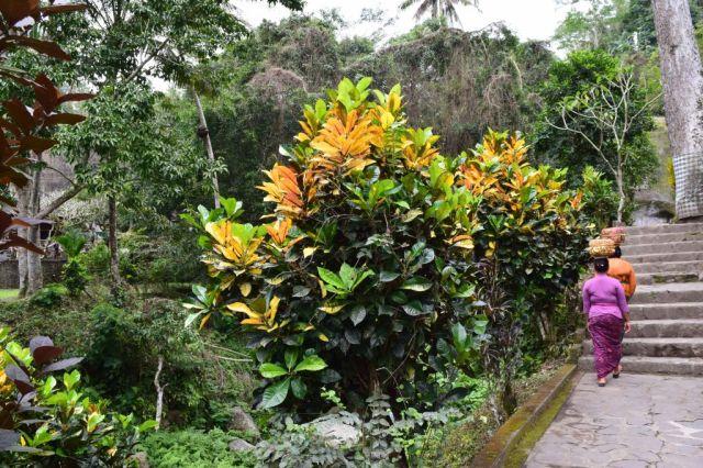 Gunung Kawi 28