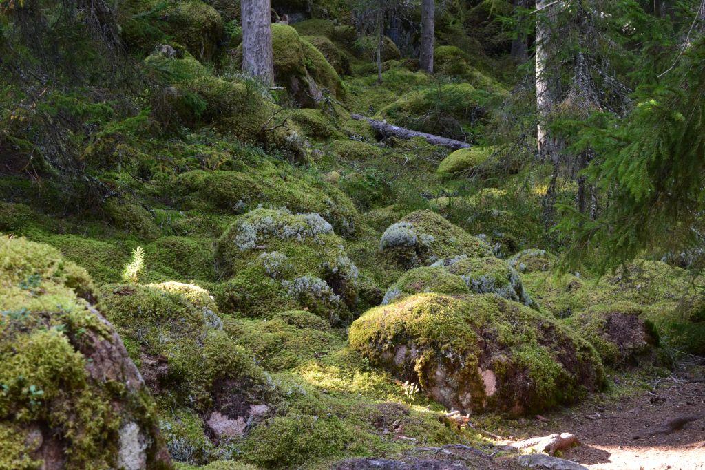 2Norra Kvills Nationalpark 104